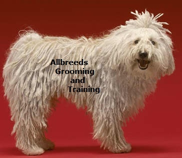 Allbreeds because your dog deserves the Best.